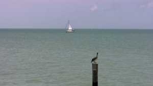 stock-footage-video-of-pelican-bird-sitting-on-a-ocean-post-and-a-sailboat-crossing-in-the-distance-port-isabel